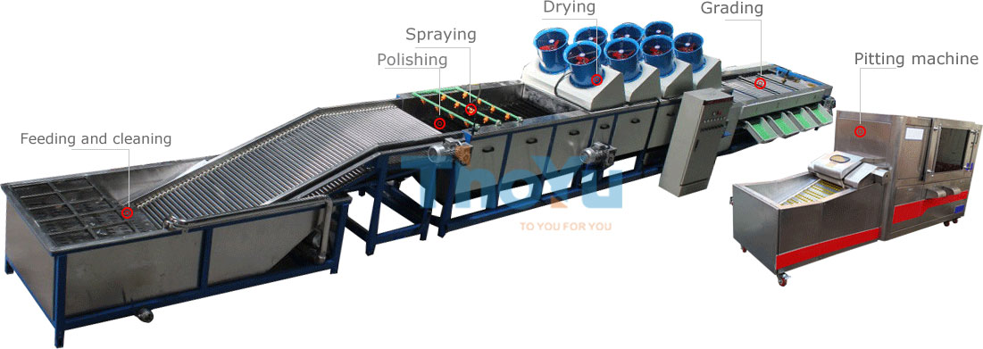 fruit grading pitting production line