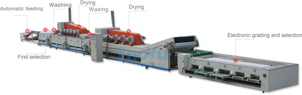 lemon washing drying waxing grading line
