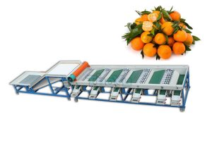 Citrus Sorting Machine