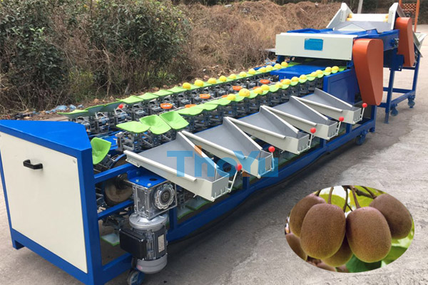 Kiwi Sorting Machine