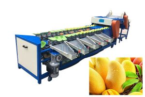 Mango Weight Grading Machine