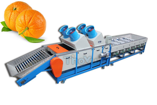 Orange Grading Machine