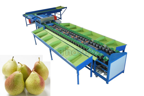 Pear Weight Grading Machine